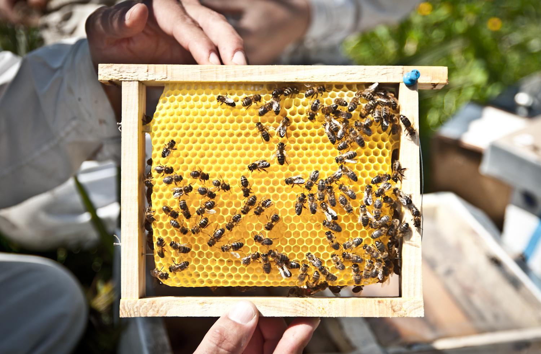 smartvolta-volta-smart-places-cadiz-miel-organic-honey06