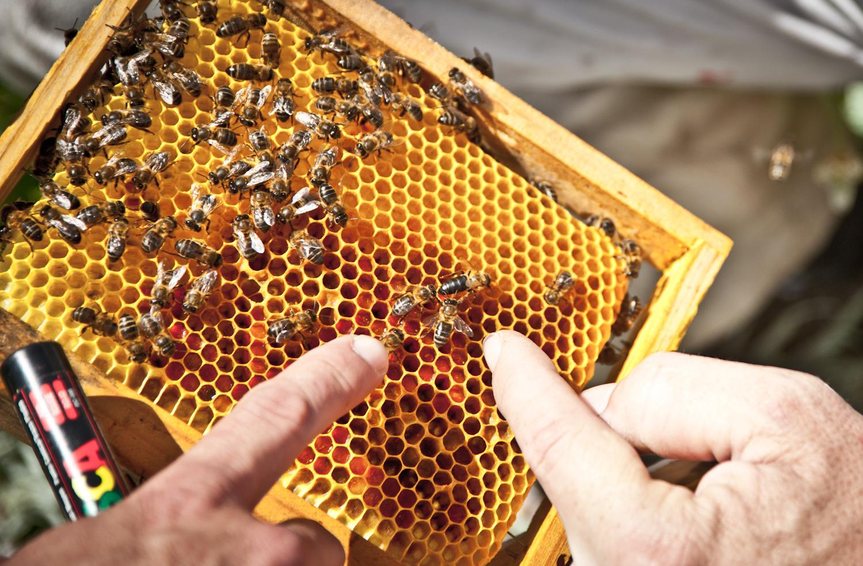 SmartVolta.com: Organic Honey From The Andalusian Coast