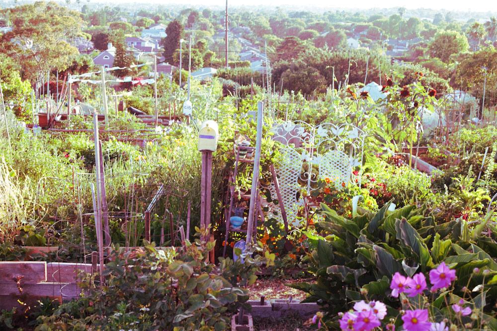 volta-smart-places-smartvolta-ocean-view-community-garden-los-angeles-sustainability12
