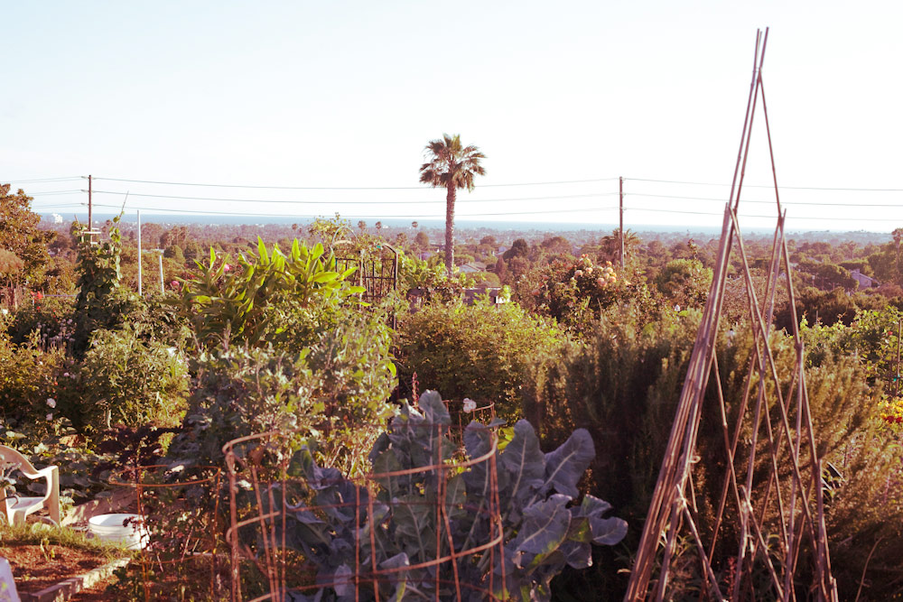 volta-smart-places-smartvolta-ocean-view-community-garden-los-angeles-sustainability1789