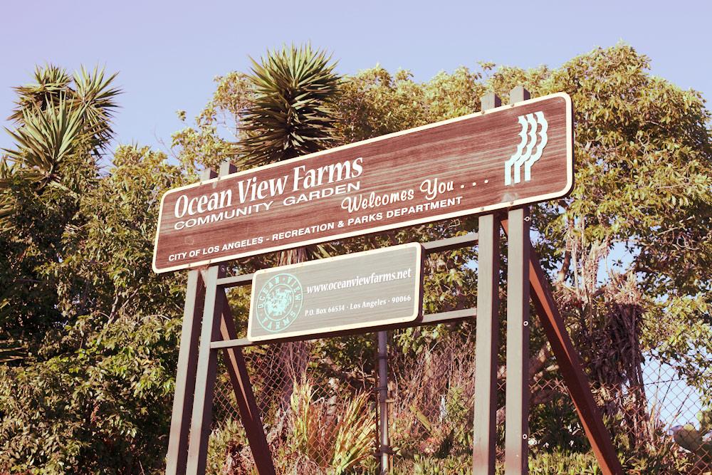 volta-smart-places-smartvolta-ocean-view-community-garden-los-angeles-sustainability18765