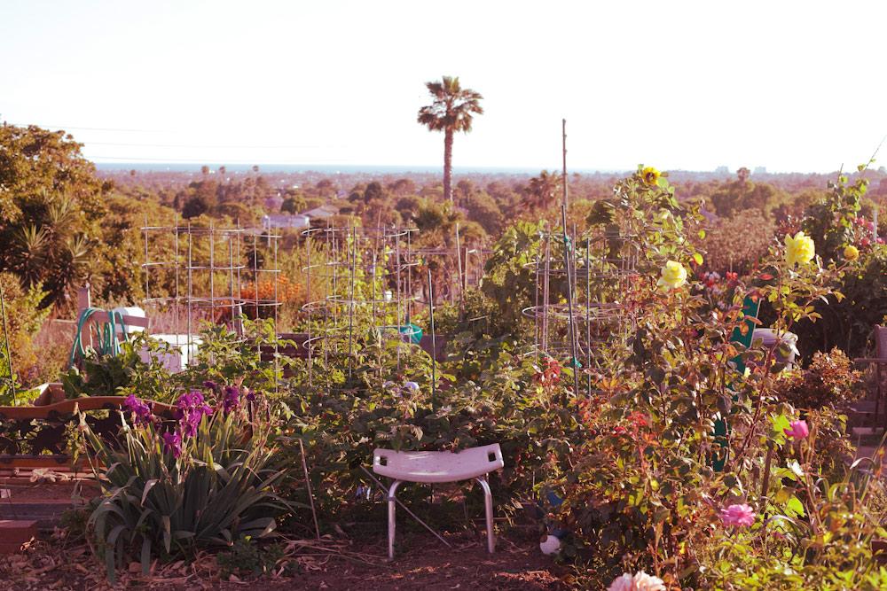 volta-smart-places-smartvolta-ocean-view-community-garden-los-angeles-sustainability3