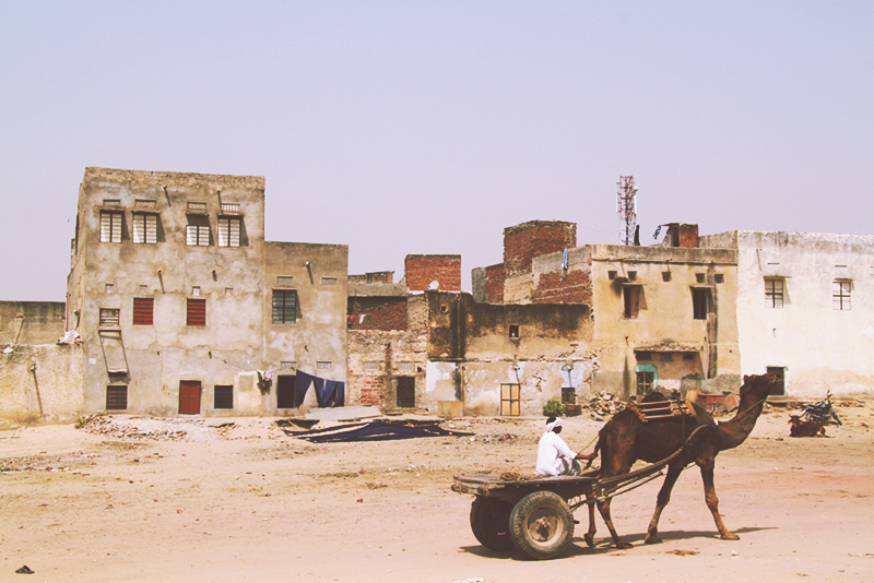 bagru_camel_cart