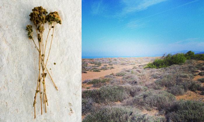 smartvolta-volta-smart-places-organic-herbs3